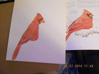 Cardinal by LighteningRain