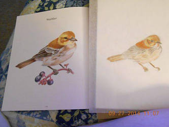 Warbler by LighteningRain