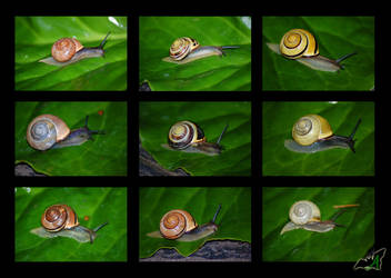 Snail Variations by Wild-Soul