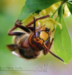 Buzzin' Hornet by Wild-Soul