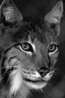 Wild Beauty by Wild-Soul