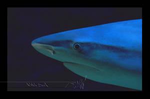 Shark by Wild-Soul