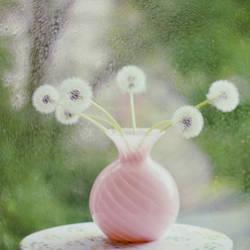 will you be my dandelion__ by bebefromtheblock