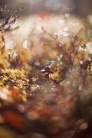 Kleiner finnischer Pilz by Lain-AwakeAtNight