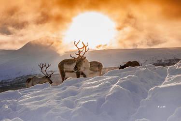 Reindeer by Lain-AwakeAtNight