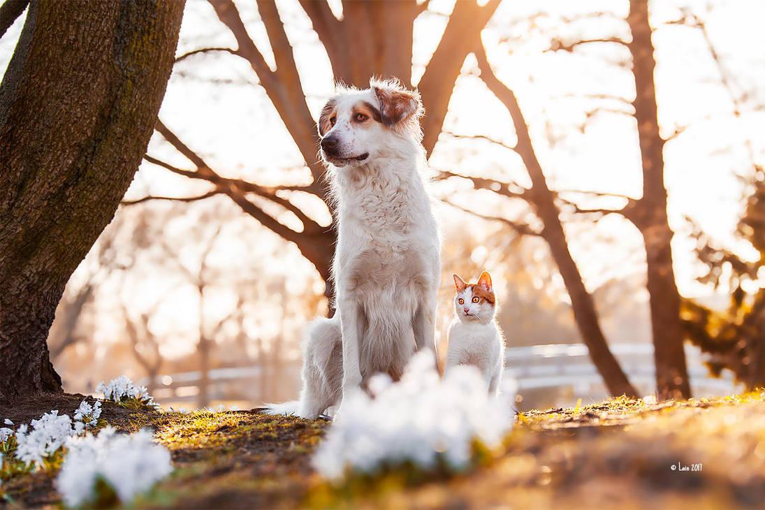 Daphne und Kitty by Lain-AwakeAtNight