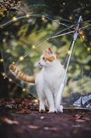 Under Kittys Umbrella by Lain-AwakeAtNight
