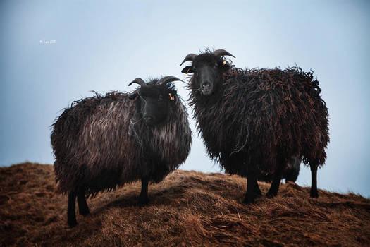black sheep by Lain-AwakeAtNight