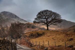 The Tree by Lain-AwakeAtNight