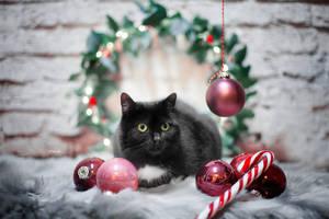 Maxi waiting for Santa by Lain-AwakeAtNight