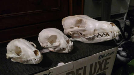skulls by LDK3