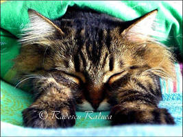 Afternoon sleep by SadAngel81