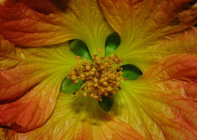Flower Macro 1 by KalkmanPhotography
