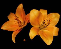 Yellow Meets Orange by KalkmanPhotography