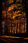 Forrest trees by ploftdk