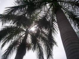 Sun Through The Palms by AmazingSpork