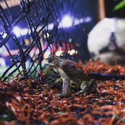 Inspirational Football Toad by nosugarjustanger
