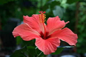 Flower Collection: Hibiscus by Germanstock
