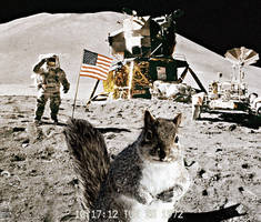 Squirrel Crashes Moonlanding by awe-inspired