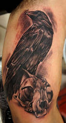 crow with cat skull by bhbettie