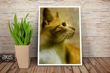 Yellow Cat by axisworx