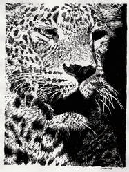 Panther by Civac
