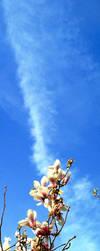 Reach the Sky by steako