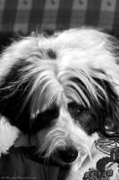 Molly The Dog by MrScruffy