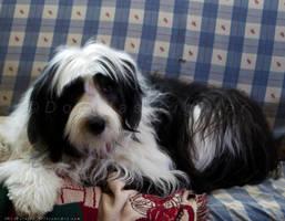 Molly The Dog 2 by MrScruffy