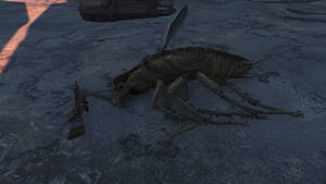 Biggest radroach ive seen yet by sootyjared