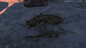 Biggest radroach ive seen yet 2 by sootyjared