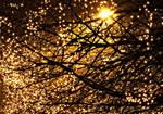 Lights Full Of Tree by 57RIK3R