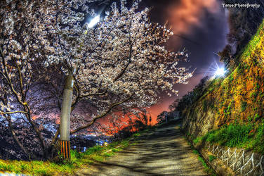Sakura at night by TOMOHDR