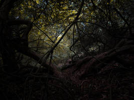 Undergrowth Underpass by doomwiggle