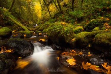 Flashes of Fall by LAlight