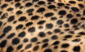 Cheetah's dots by OrangeRoom