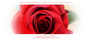 Roses Art by Ellysiumn-GvE