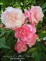 Flowers garden by Ellysiumn-GvE