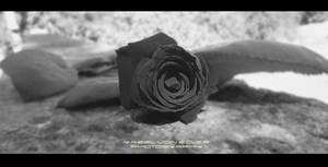 Black Rose by Ellysiumn-GvE