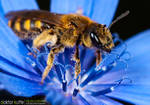 Dancing Bee by Stefano-Coltelli