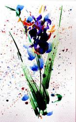 Iris. by Taiss14