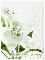 Flowers by Morgybr00
