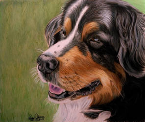 Bernese on Drafting Film by anniecanjump