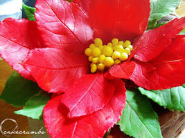 Christmas Poinsettia Cake by cakecrumbs