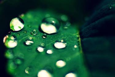 Fresh Rain by aubirdy