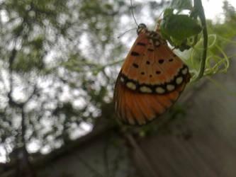 sleeping butterfly by lovuhemant
