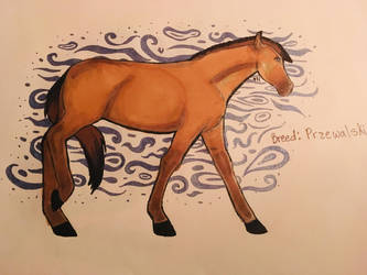 Przewalskis Horse  by HorseyStableSkitz