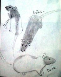 Rat sketches by pogovina