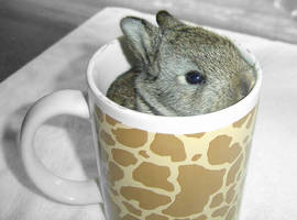 Have a cup of cuteness by pogovina
