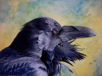 Corvid Collection - Raven by S4MMY4RT